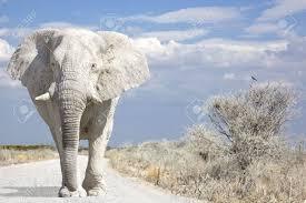 象 オツベル あらすじ と